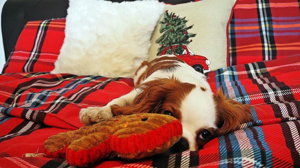 christmas bedding tartan