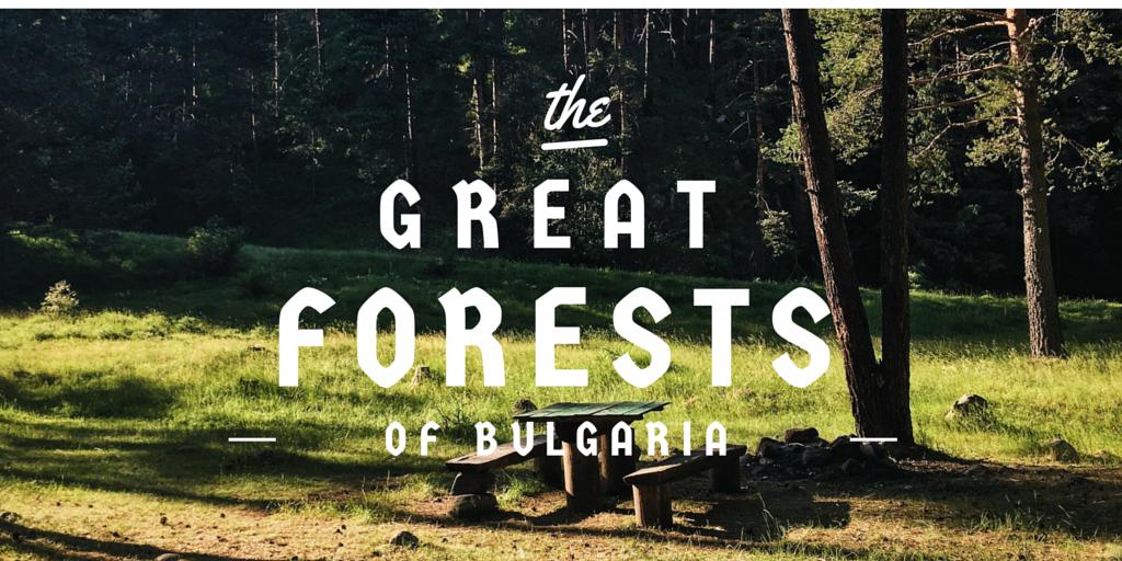 къмпинг в гората България